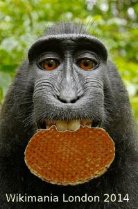 Stroopwafel selfie. Foto: AlisonW, CC0-1.0 via Wikimedia Commons
